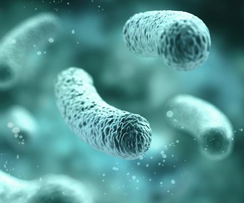 15 verschiedene Bakterienstämme