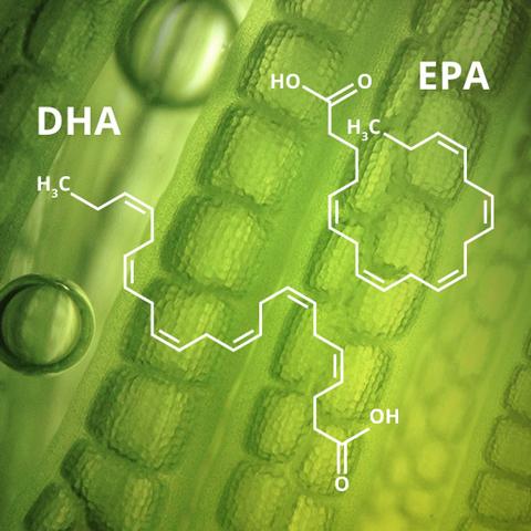 Omega-3: DHA und EPA