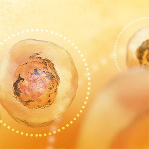 Selen zum Schutz der Zellen vor oxidativen Schäden