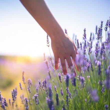 Color-Waschmittel Lavendel