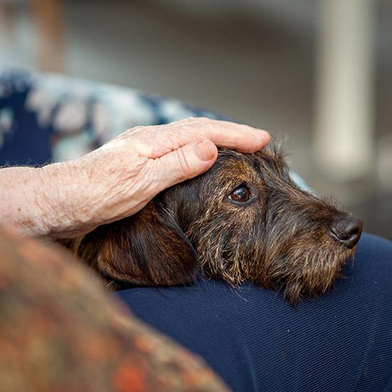 Hund wird von älterer Hand am Kopf gestreichelt.