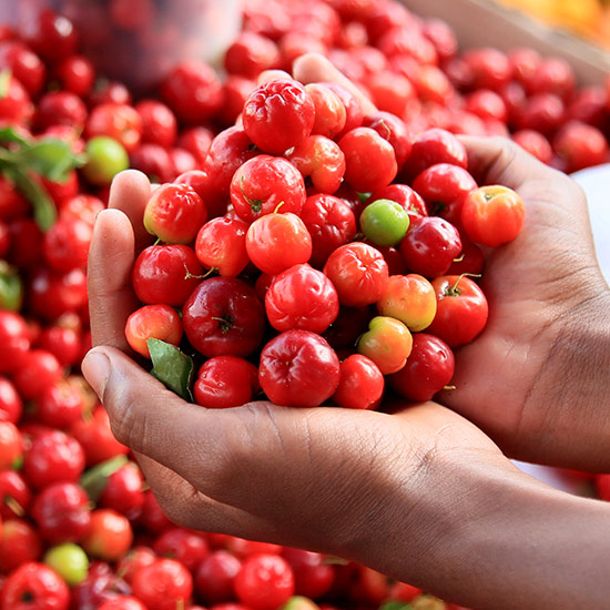Hands full of Acerola cherries