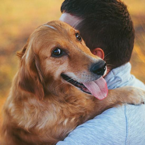 Hund, der Mann umarmt.