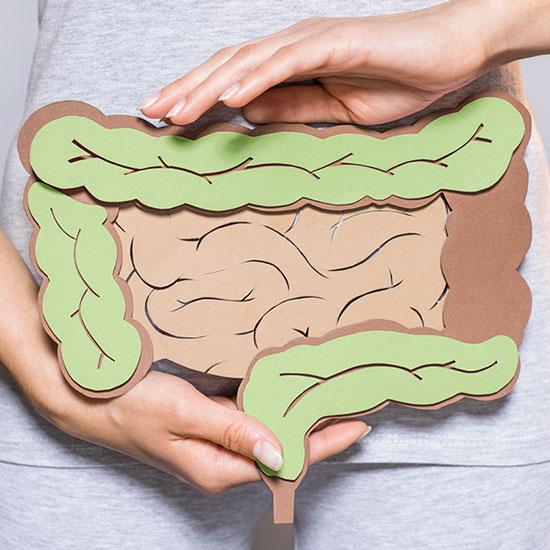 Unser Spezialgebiet: Die Darmgesundheit