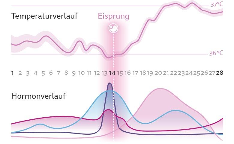 Hier bitte komplette grafische Übersicht über 1. und 2. Zyklushälfte