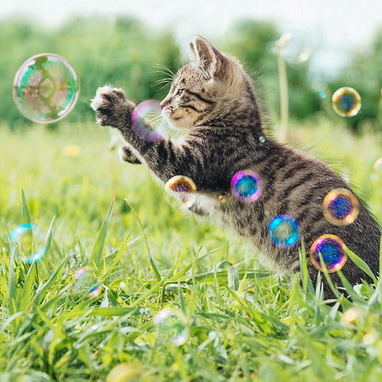 Katze spielt mit Seifenblasen auf einer Wiese.