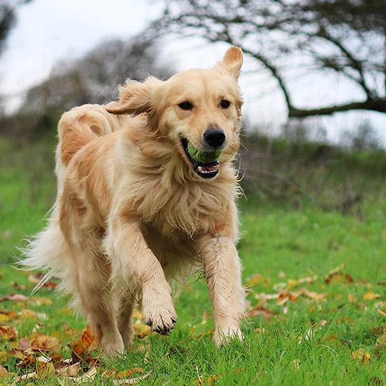 Rennender Hund im Wald.