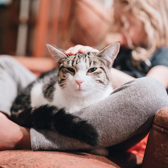 Katze liegt in Schoss von Frau und wird gestreichelt.