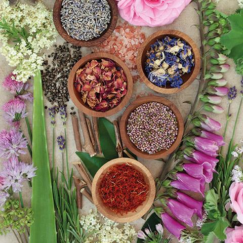 Pflanzliche Extrakte in Nu Grow