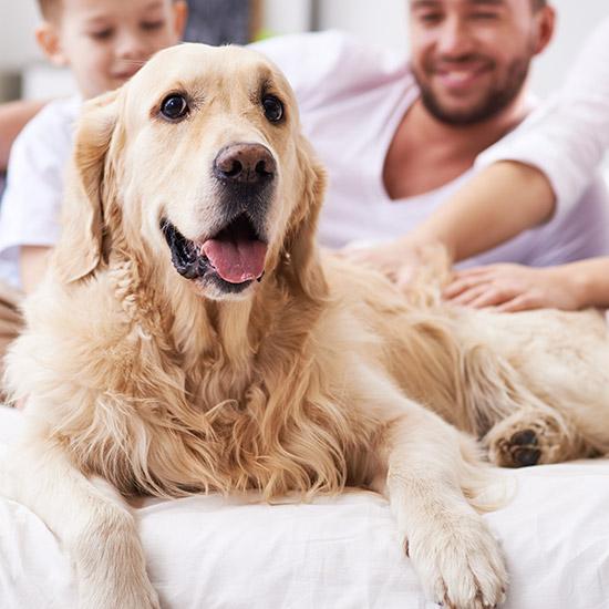Hund liegt auf Sofa, Menschen im Hintergrund.
