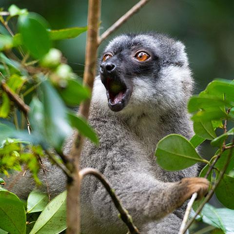 Schutz der Artenvielfalt