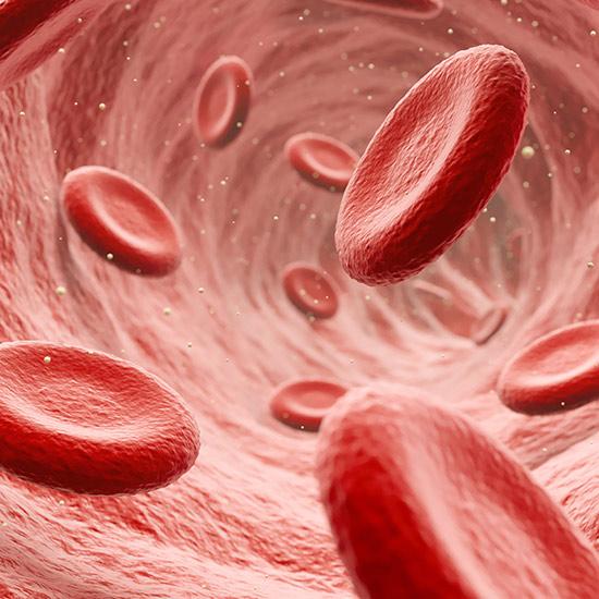 Illustration Blutkörperchen in Blutbahn