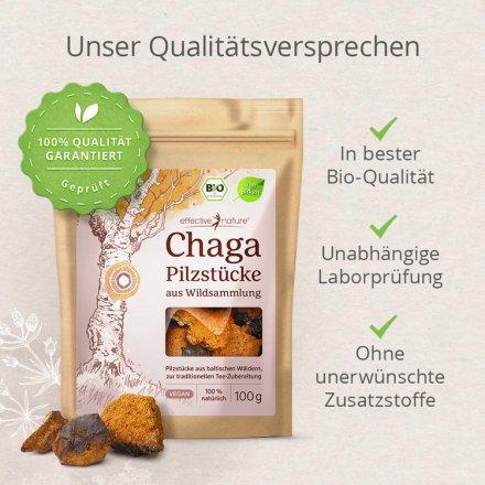 Chaga - der Teepilz in Bio-Qualität