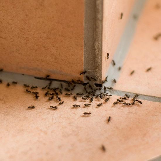 Ameisenköderdose