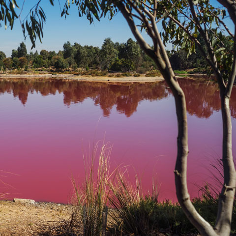 Rot gefärbtes Wasser