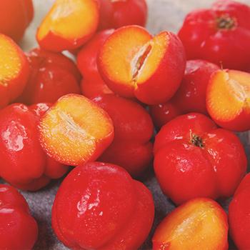 Vitamin C aus der Acerola-Kirsche