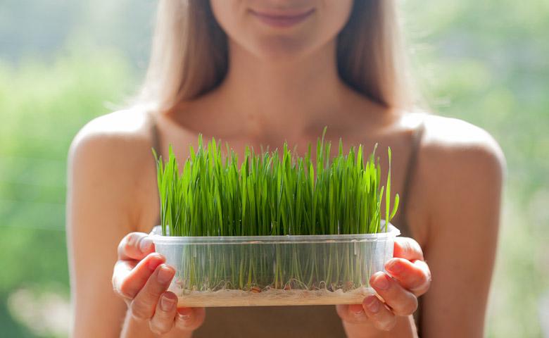 Woman holding growing barley grass