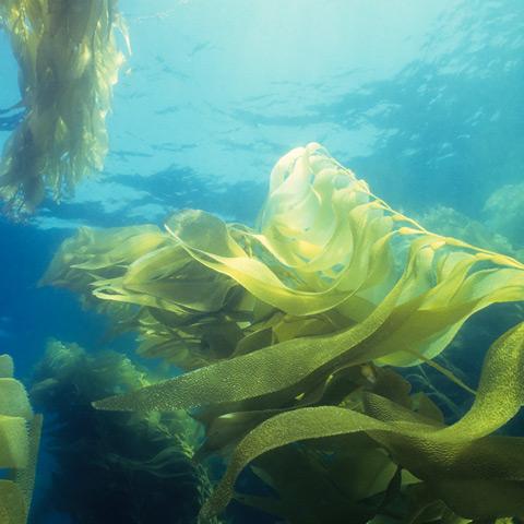 Algen im Wasser