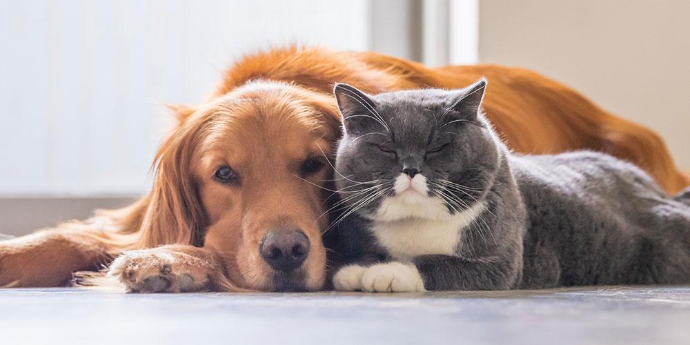 Hund und Katze liegen eng beieinander auf dem Boden.