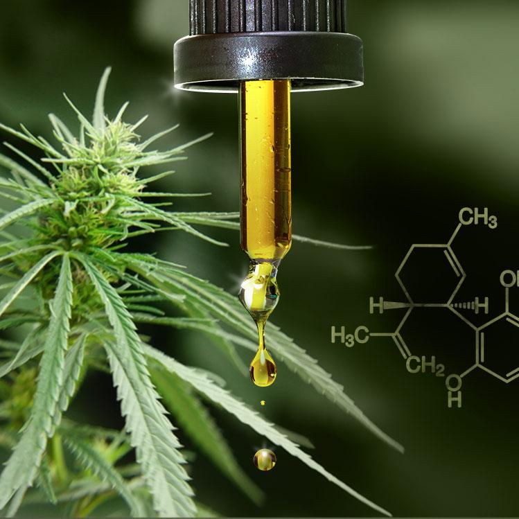 Grossaufnahme Hanftropfen, Hanfpflanze und chemische Verbindungen