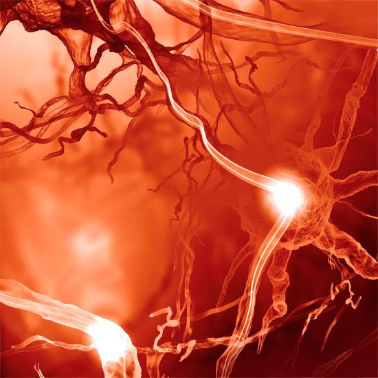 Nervenzellen, die Signale übertragen