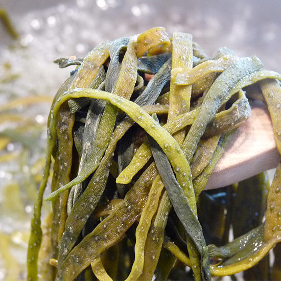 Meeres-Spaghetti