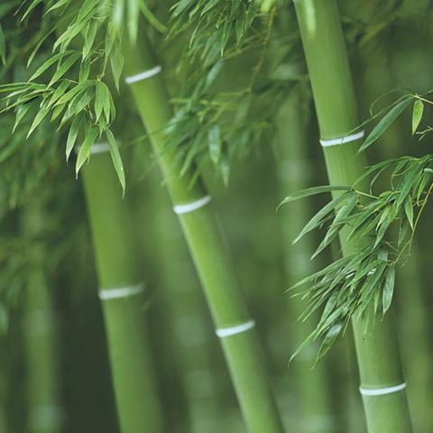 Silizium Bambus