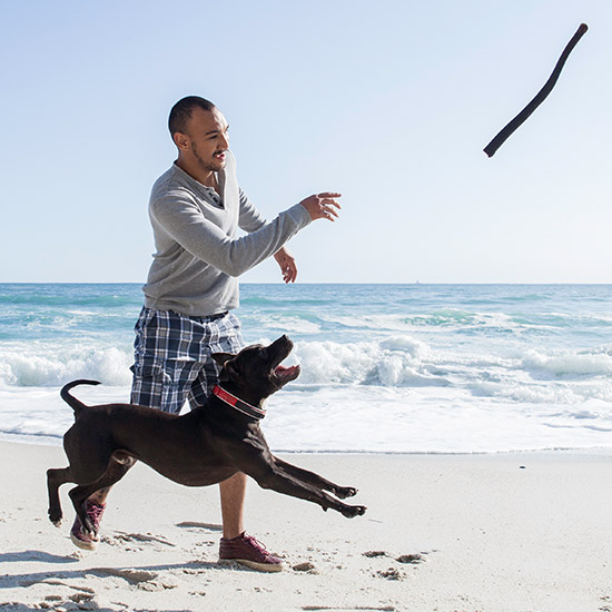 Mann, der am Strand einen Stock wirft für Hund, der neben ihm läuft.