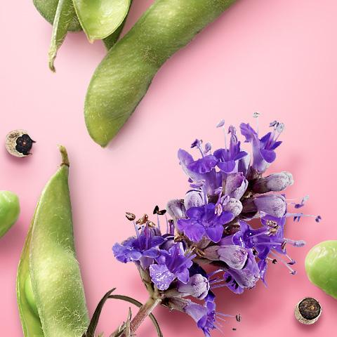 PMS Balance mit wertvollen Pflanzenextrakten