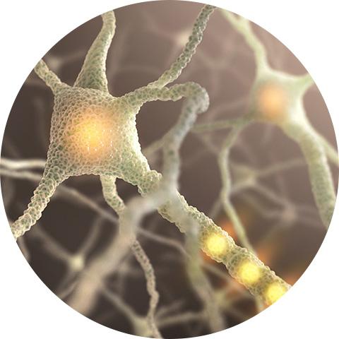 Unterstützung der normalen Gehirnfunktion