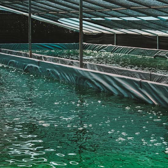 Anlage für Spirulina-Anbau in Deutschland