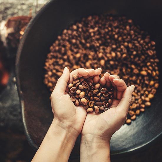 Hand, die geröstete Kaffeebohnen hält.