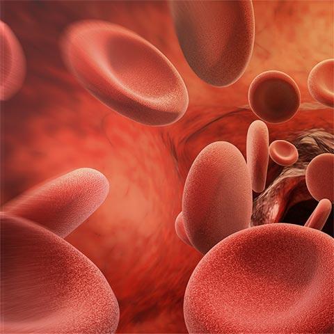 Eisen für die Blutbildung