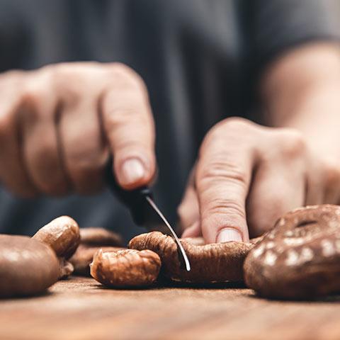 Shiitake als Speisepilz
