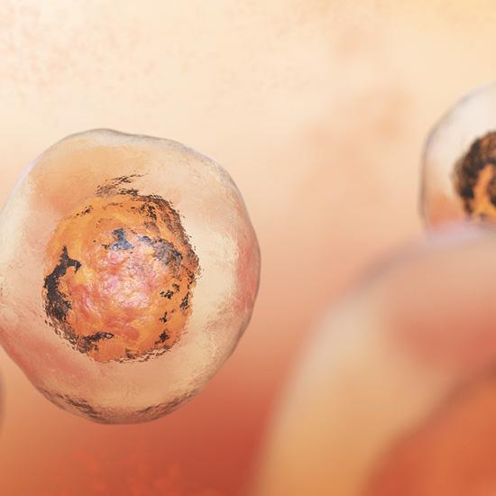 Menschliche Körperzellen