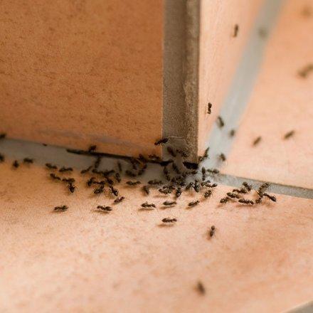 Ameisenköderdose - 2 Stk.