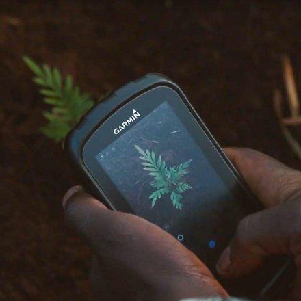 Baum-Gutschein für den myFairtrade-Wald