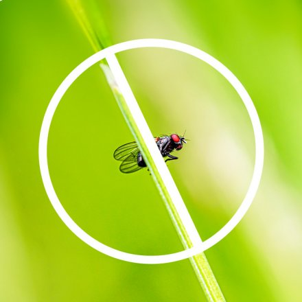 Fliegen Stopp - 200ml